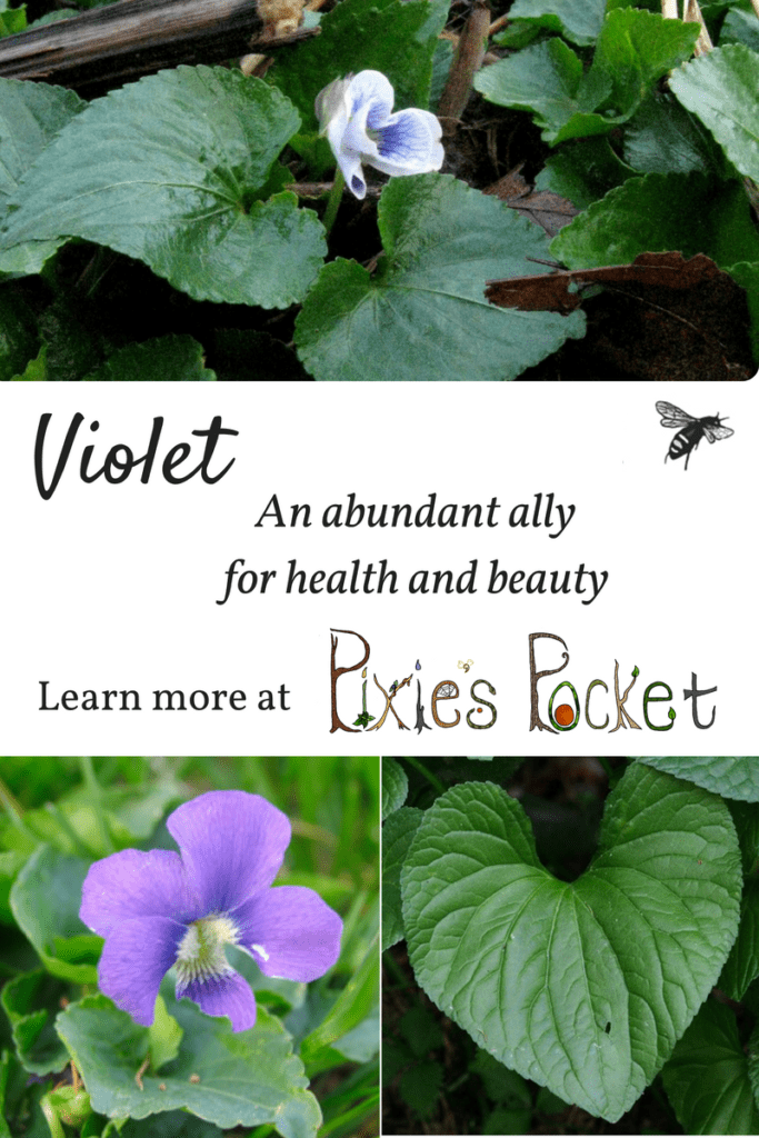 make your own facewash out of violet leaves and flowers! learn about violets on pixiespocket.com