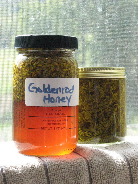 Goldenrod honey, soaking up the sun.