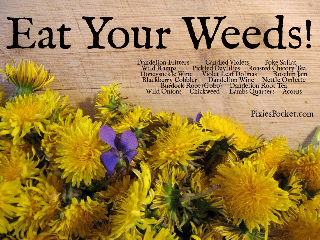 Eat your weeds and wildflowers - pixiespocket.com