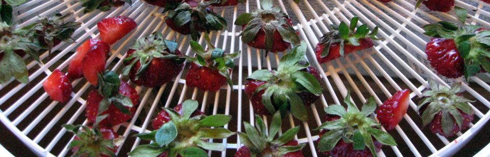 strawberry tops to dehydrate