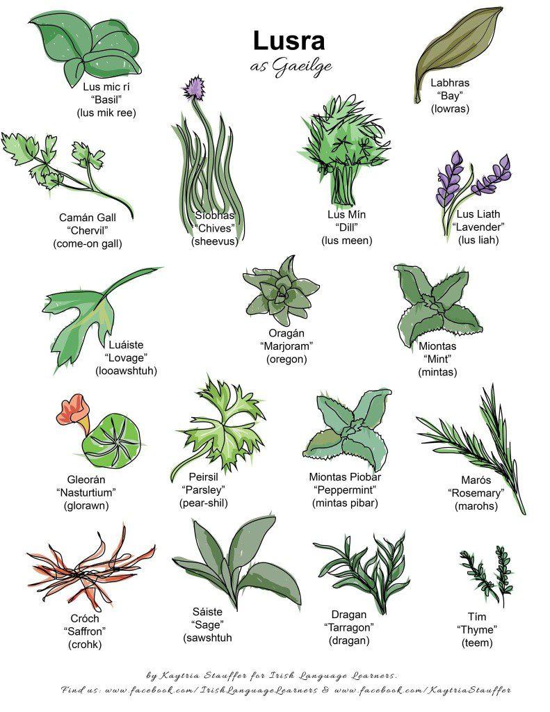 Irish Gaeilge names for herbs by Irish Language Learners