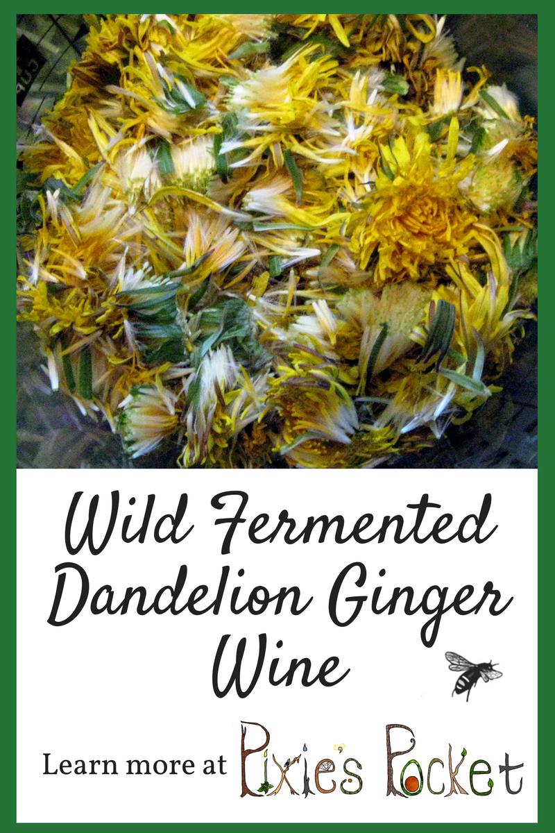 WILD FERMENTED DANDELION GINGER WINE