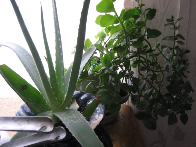 plants in pots over winter pixiespocket.com