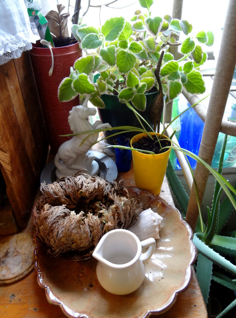 """my window garden, from """"Container Gardening: Winter Edition"""" on pixiespocket.com"""