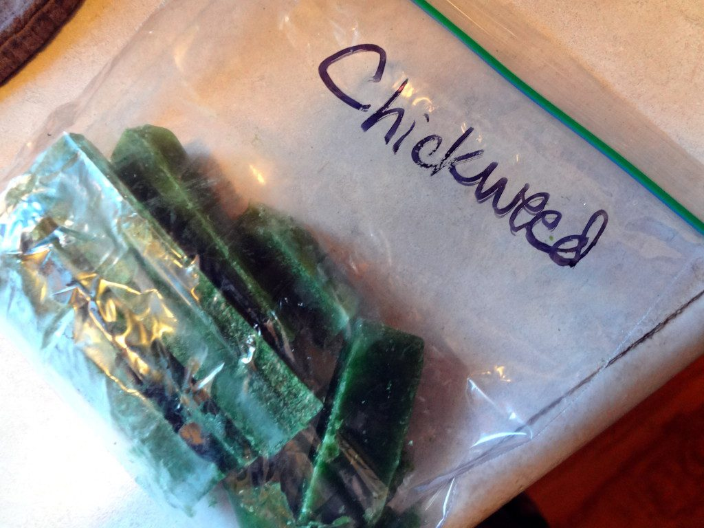 chickweed cubes