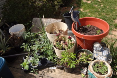 Raised Beds and Making Do in the Garden