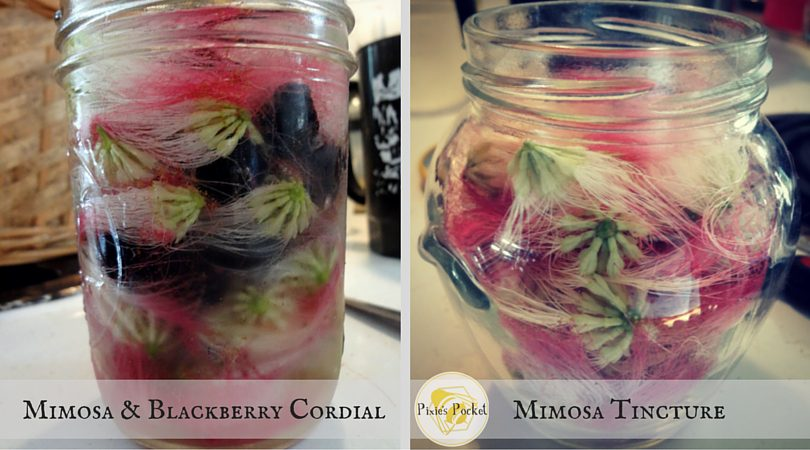 Mimosa tincture and mimosa cordial on pixiespocket.com