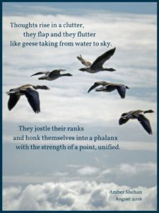 Geese poem by amber shehan of pixiespocket.com