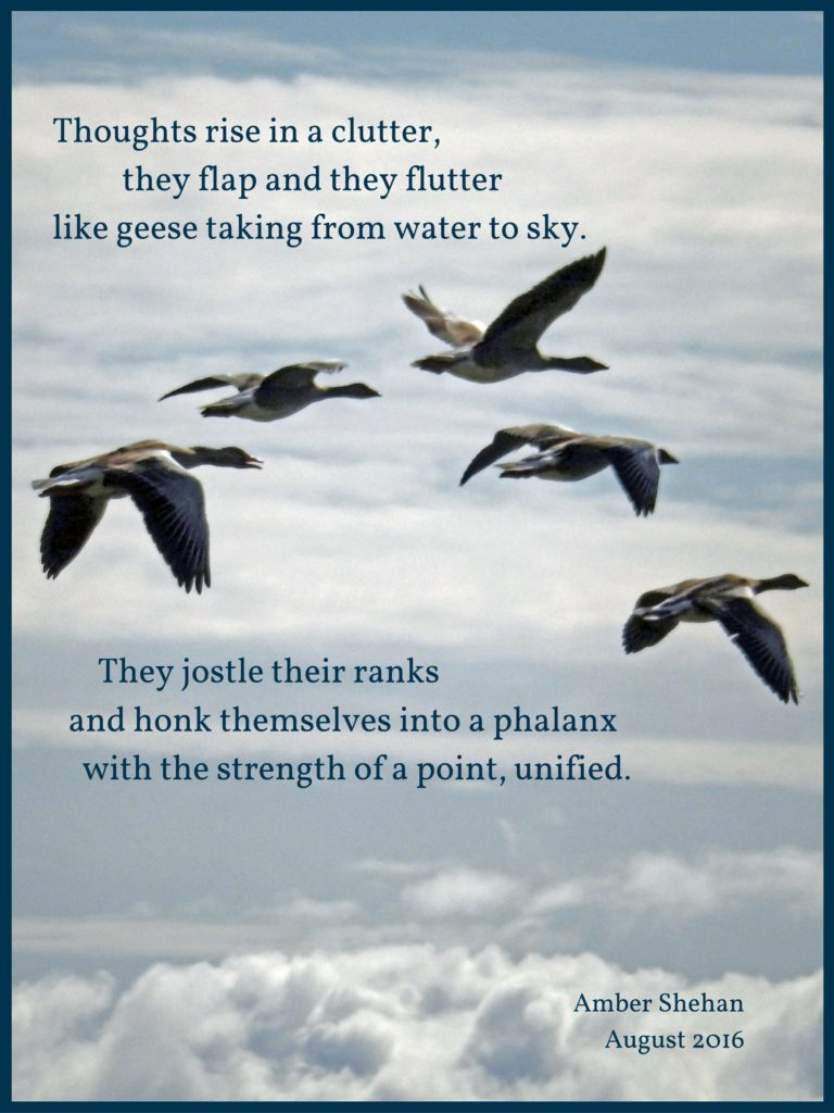 Flocking Thoughts - a poem by amber shehan of pixiespocket.com