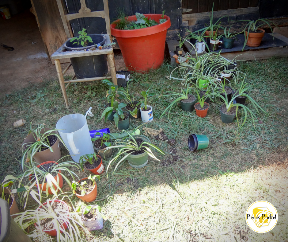 repotting houseplants in September - pixiepocket.com