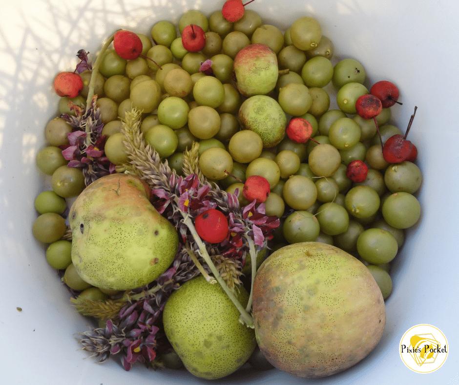 foraged fruit - pixiespocket.com