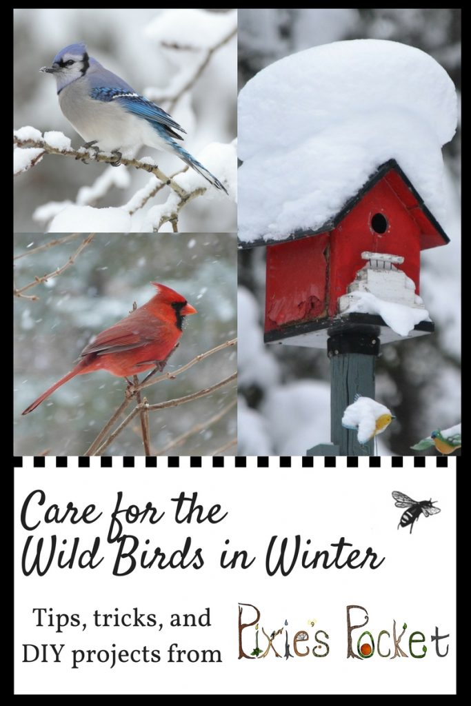 care for wild birds in winter