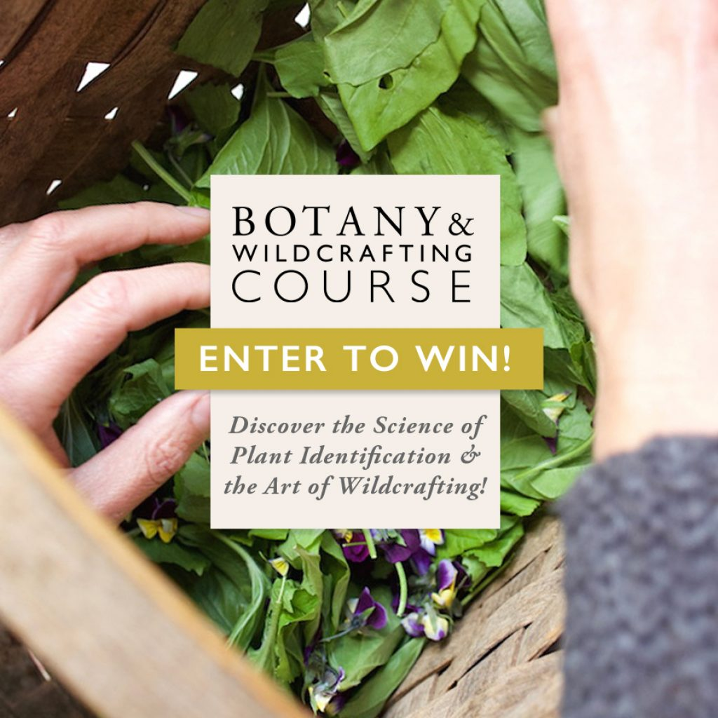 Basic Botany and Wildcrafting Course GIVEAWAY through April 17 2018 - Herbal Academy on Pixie's Pocket