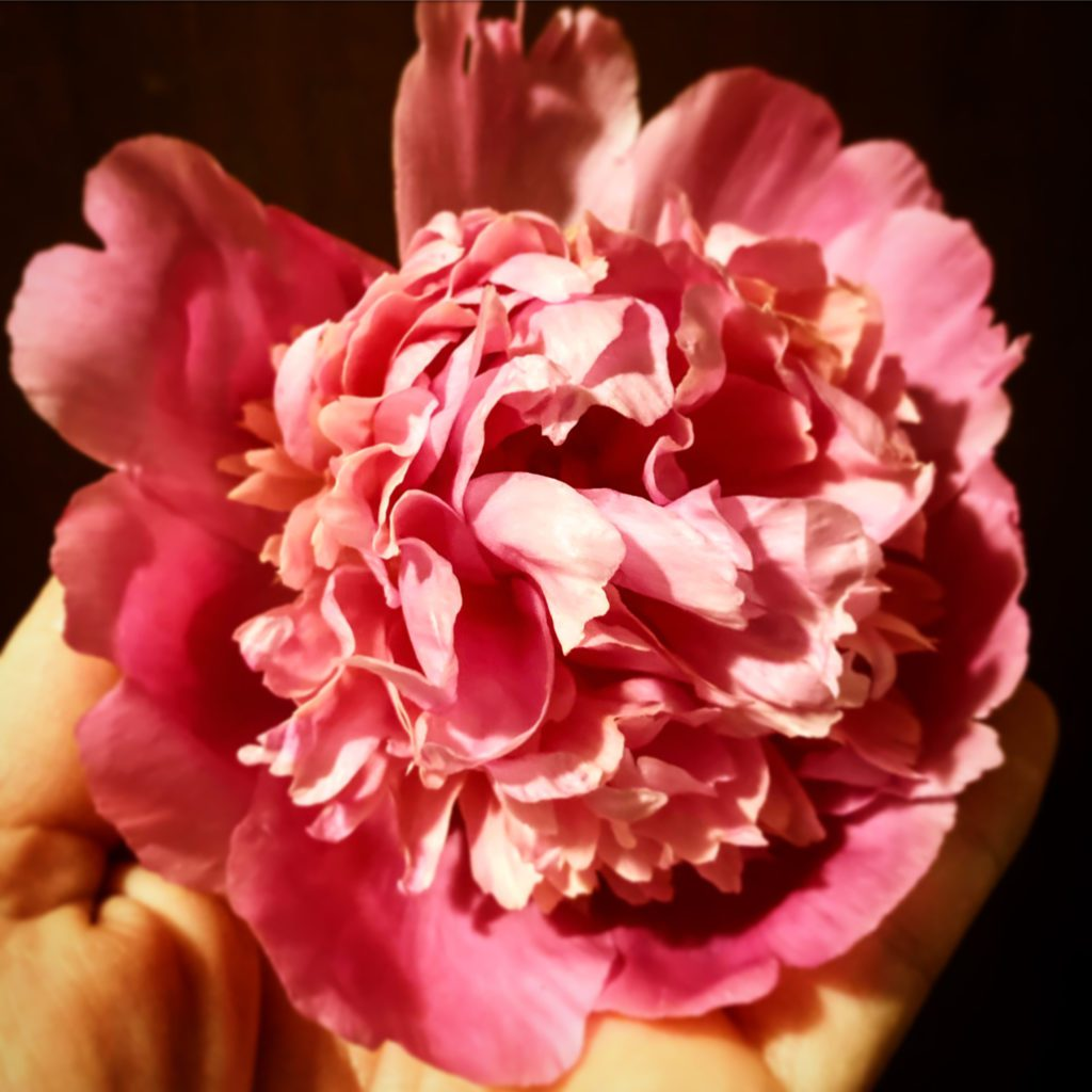 Rose and Peony Infused Honey Recipe