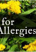 Seasonal Allergies Goldenrod Banner