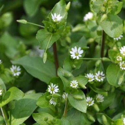 LET'S TALK ABOUT: HERBAL RELIEF FOR BARTHOLIN CYSTS from PixiesPocket.com