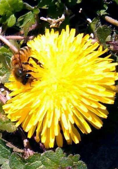 beeblossomcindythomas