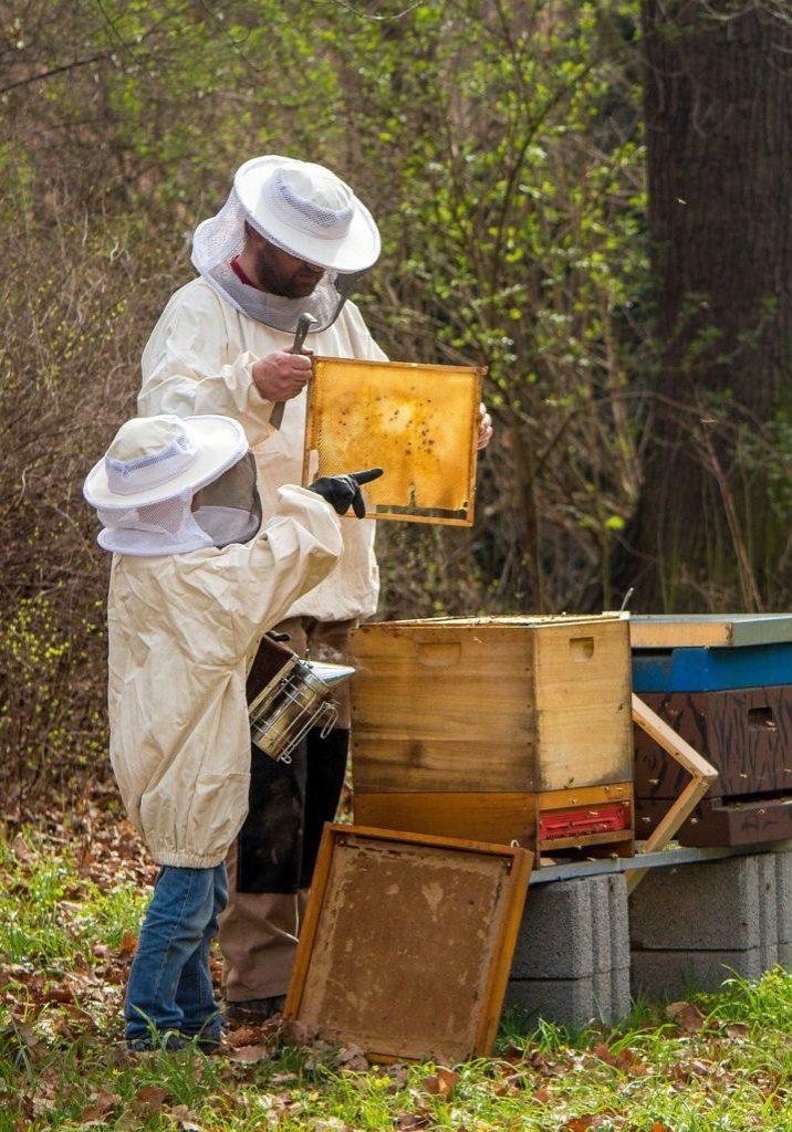 beekeeper-4426003_1920