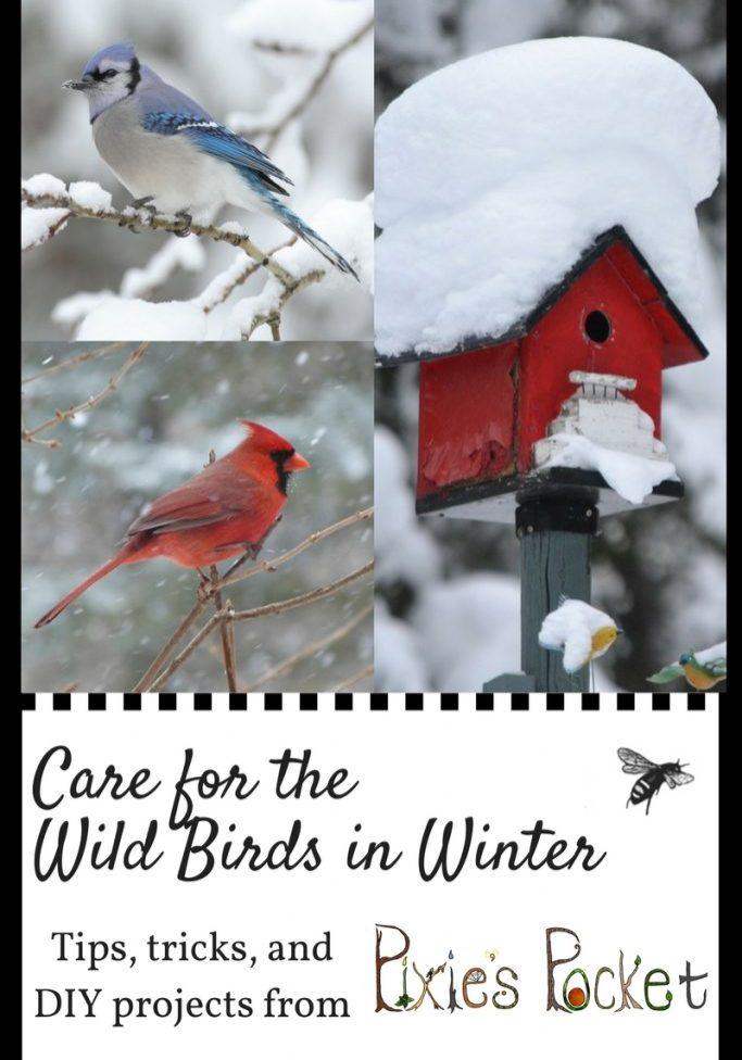 care for wild birds in winter