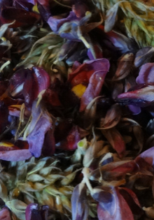 kudzuflower header