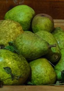 pears-blog-header