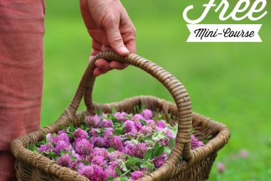 Handcrafted Herbalism – do you want a free class?