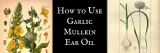 How to use Garlic Mullein Ear Oil for Earaches
