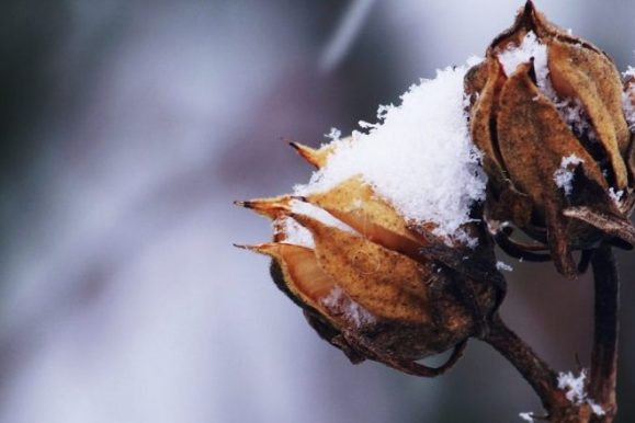 Tips to Prepare Your Outdoor Plants for Winter