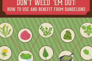 Dandelion Recipes (and infographic!)