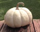 Things I Love: Tiny Pumpkins