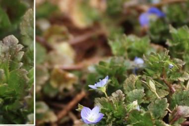 Appalachian Spring: Plant Identification 1 (Solved)