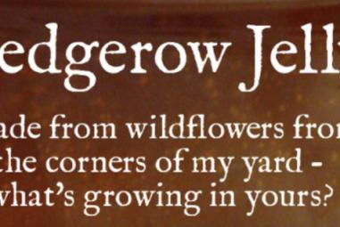 Recipe Box: Hedgerow Jelly