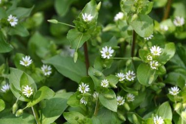 Let's Talk About: Herbal Relief for Bartholin Cysts