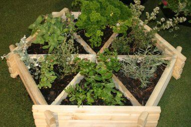 Container Gardening: Winter Edition