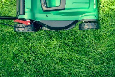 Orlando lawns into suburban gardens!