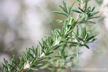 Herbal Vinegar Hair Rinses