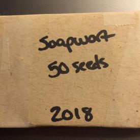 Soapwort Seeds
