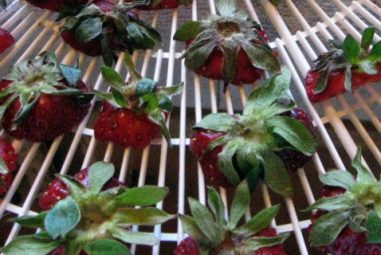 Drying Strawberry Tops